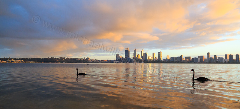 Black Swans on the Swan River at Sunrise, 7th June 2015