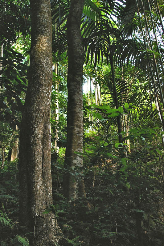 Atauro montane forest