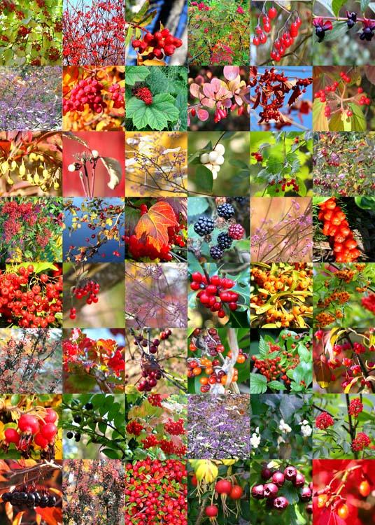 11 berry quilt