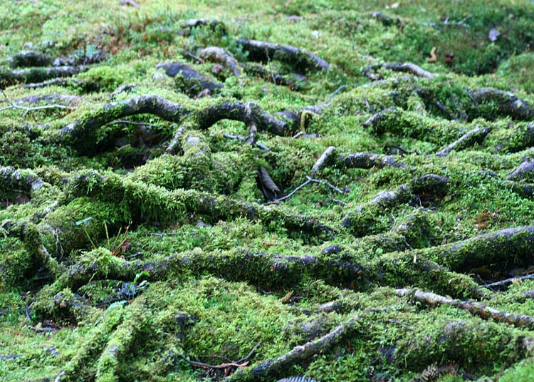 36 moss and roots