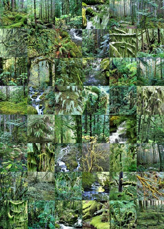 rainforest quilt