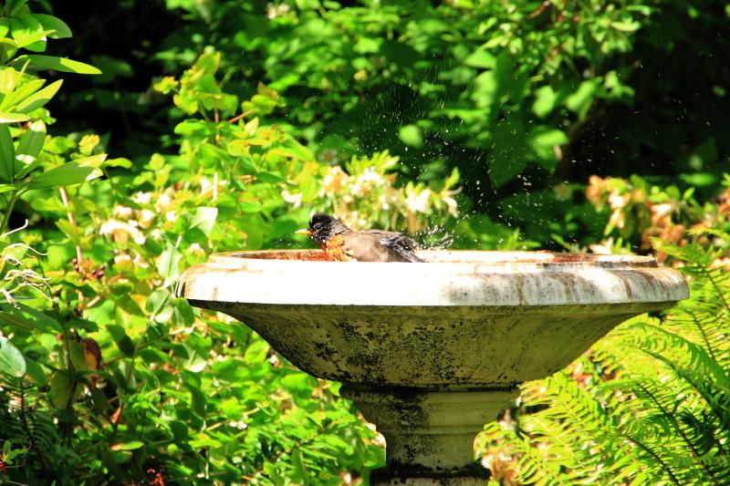 Bird bath, Pittock Mansion, Portland, Oregon