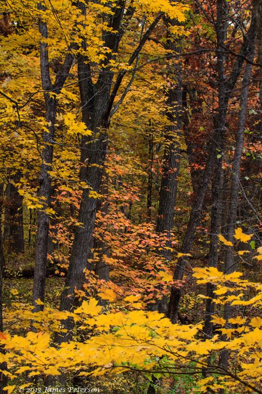 Reed Turner Woodland Nature Center (28190)