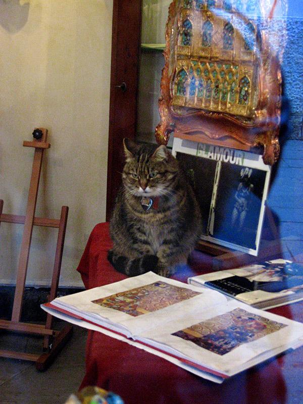 Bella, Dorsoduro shop cat .. 3007
