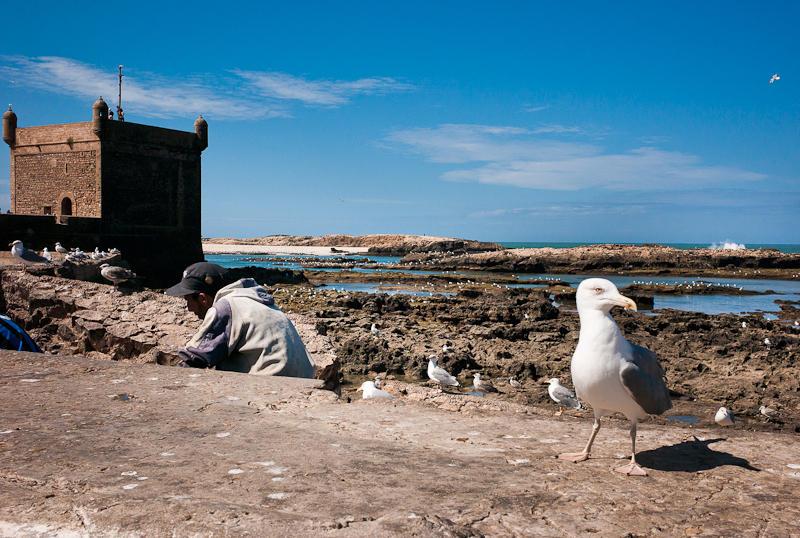 31-Morocco2©ALBERT_ENGELN.jpg