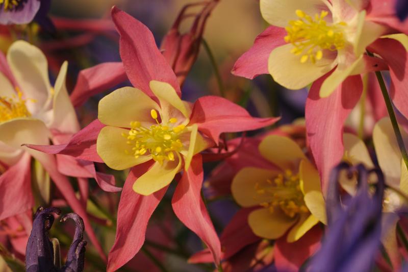 11 June: Flowers