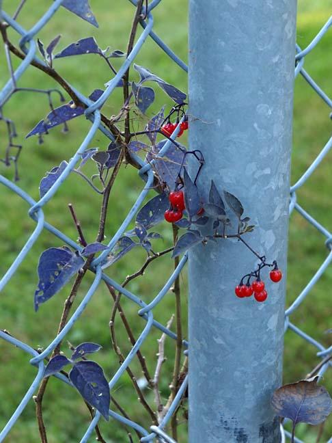 Fence 9165802
