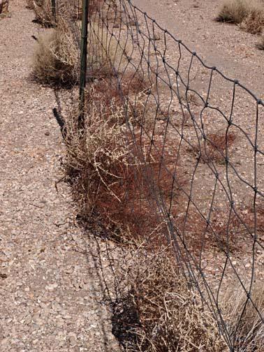 Fences 22138