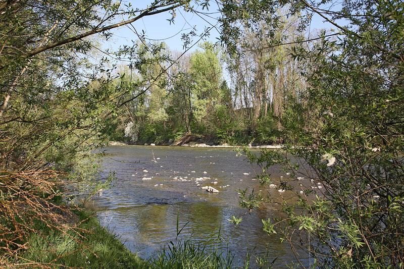 River Savinja reka Savinja_MG_2741-1.jpg