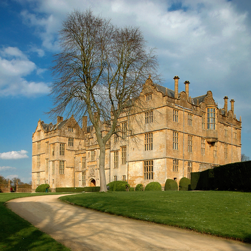 Montacute House ~ drive and tree