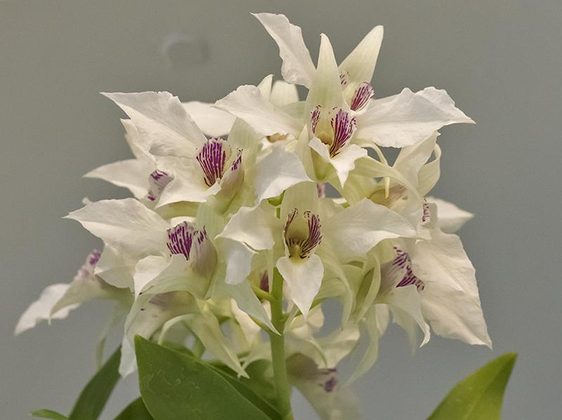 Ceiling bouquet