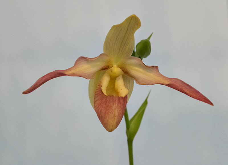 A welcoming orchid