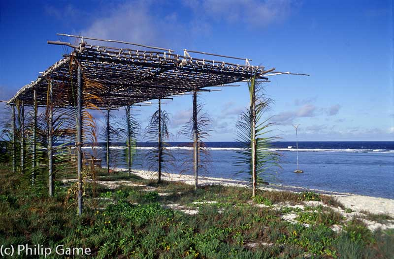 A traditional roost for captive frigate birds