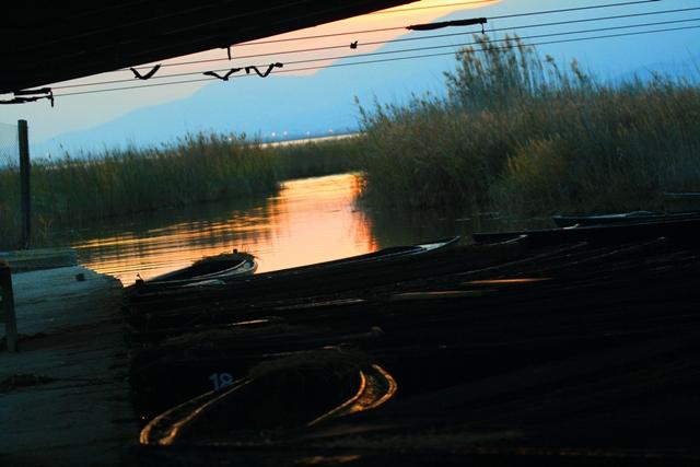Encanyissada amb barques de perxar - Encarrizada - Reed bed Lagoon