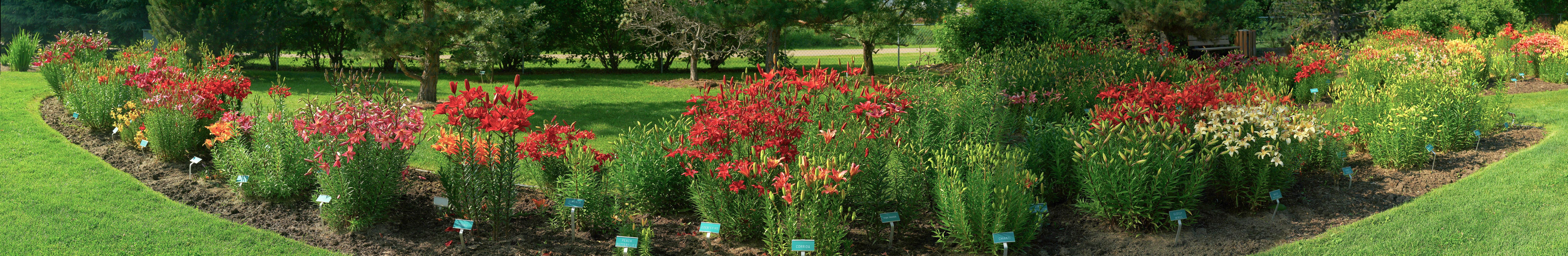 Lily Garden, St. Albert