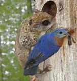 VIDEO: Nature Sharing....