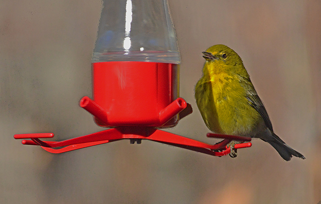 <b>VIDEO:  MORE  THAN  JUST HUMMERS</b>