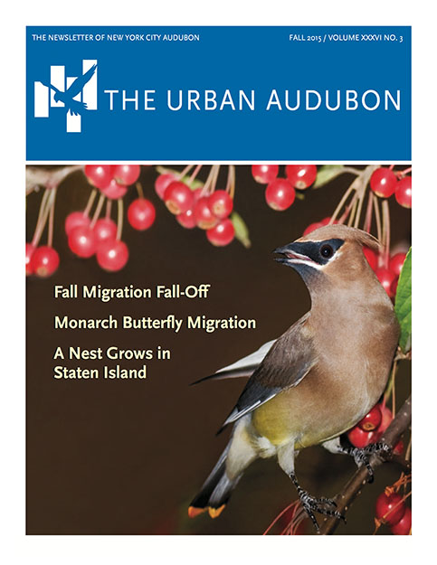 Urban Audubon Cover - Fall 2015