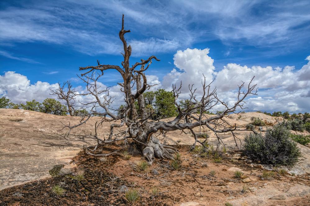 Canyonlands, the Needles