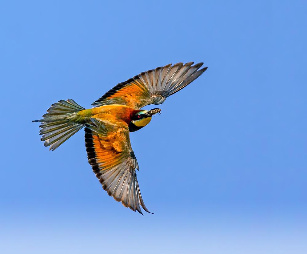 Aerobatics in color.