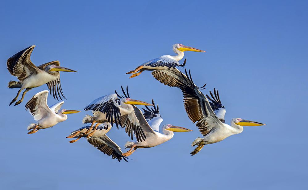 The autumn migration