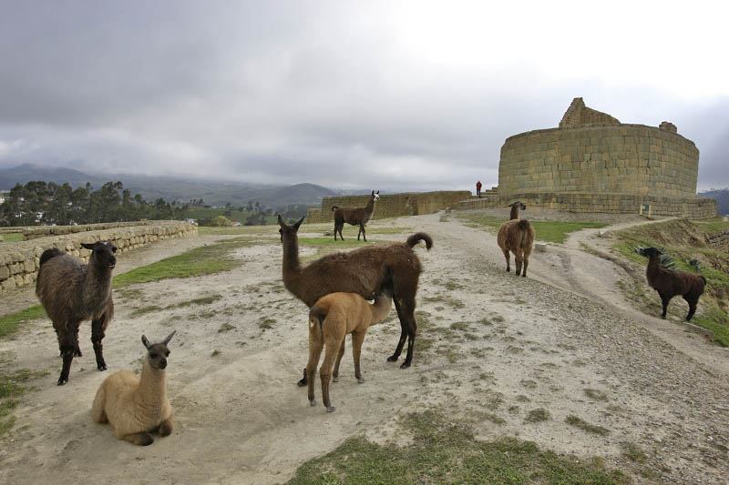 Ingarpica, Ecuador