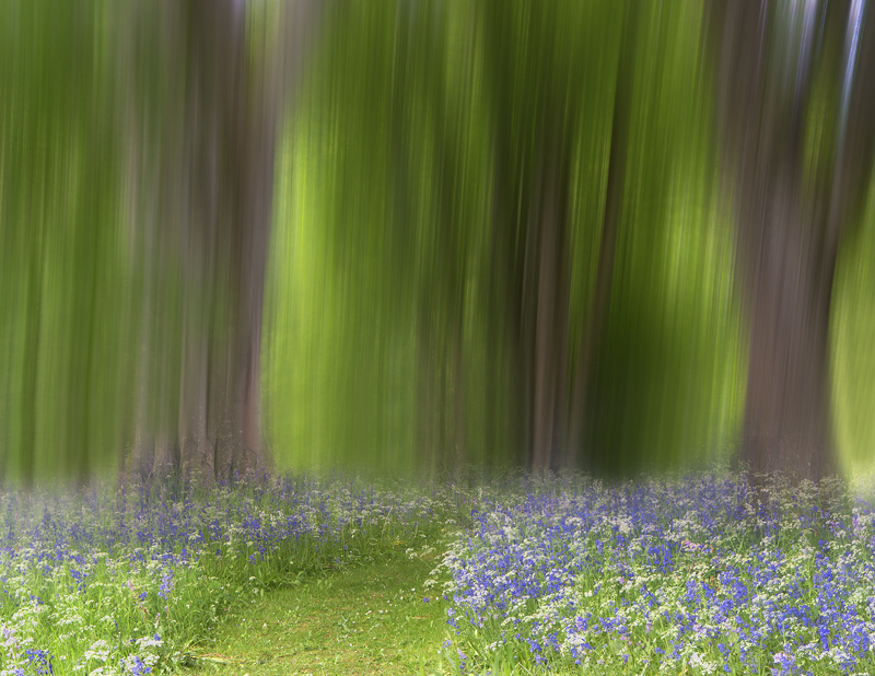 Bluebell Abstracts