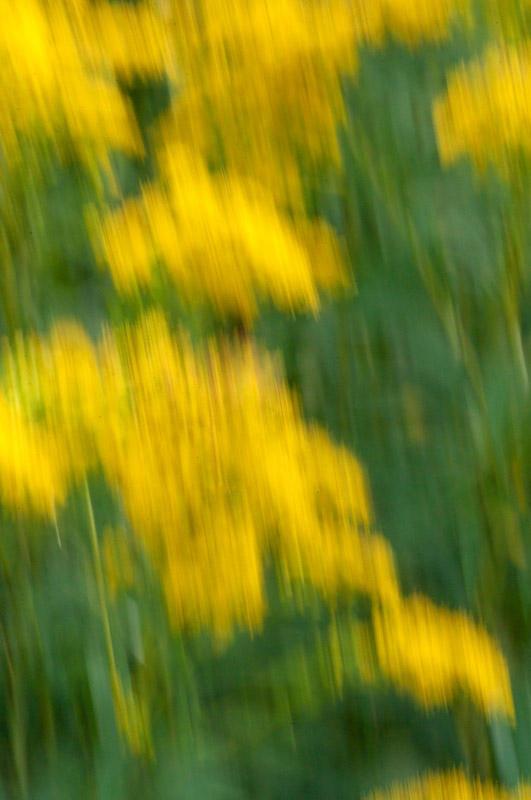 Meadows Colors