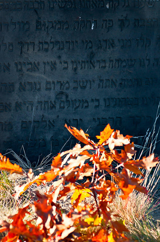 Fall Foliage At Cemetery