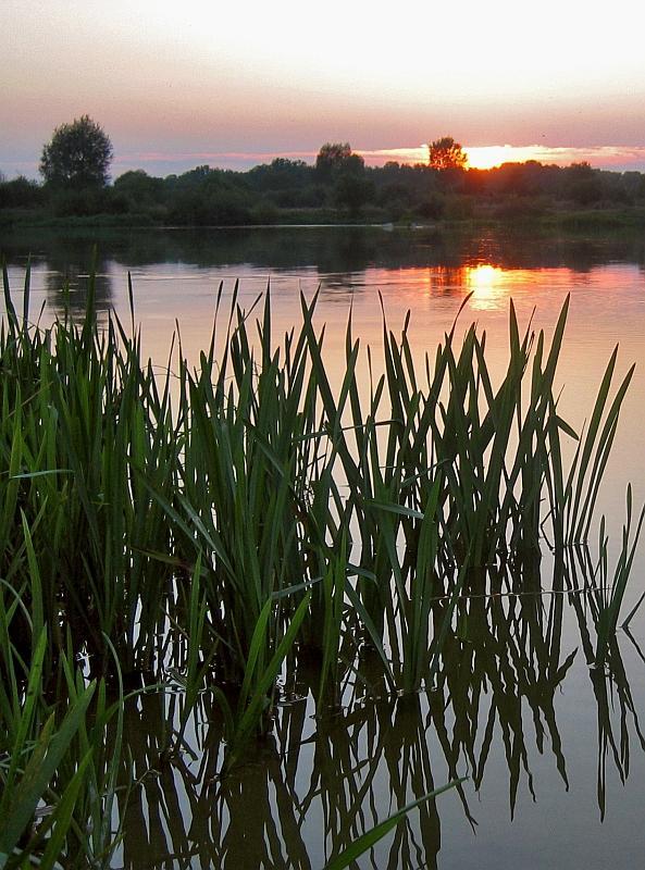 Bug River Evening