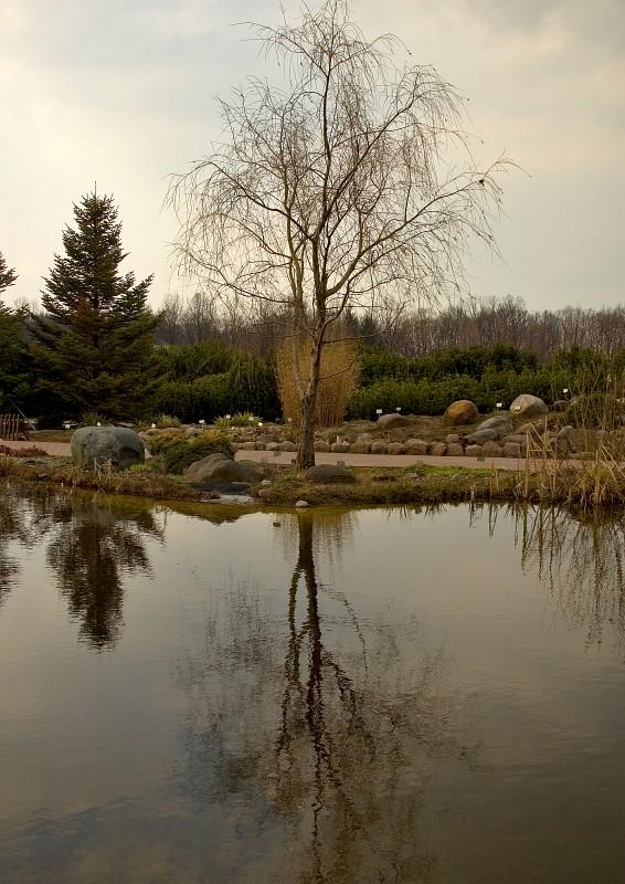 Early Spring Reflection