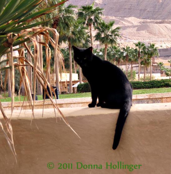 Dead Sea Kitty