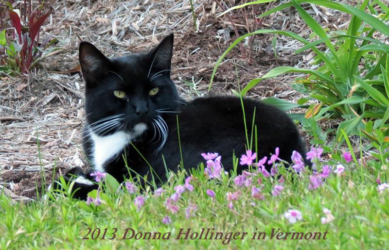 Rocky in the Garden