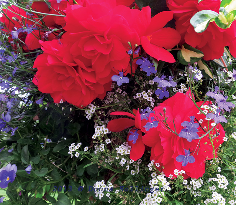 Roses and Lobelia