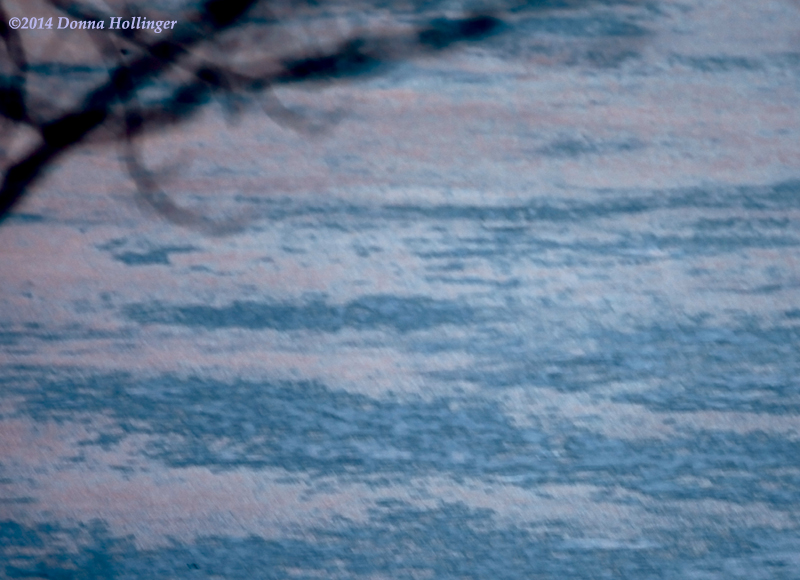 Twilight Colors reflected in Ice at Fresh Pond