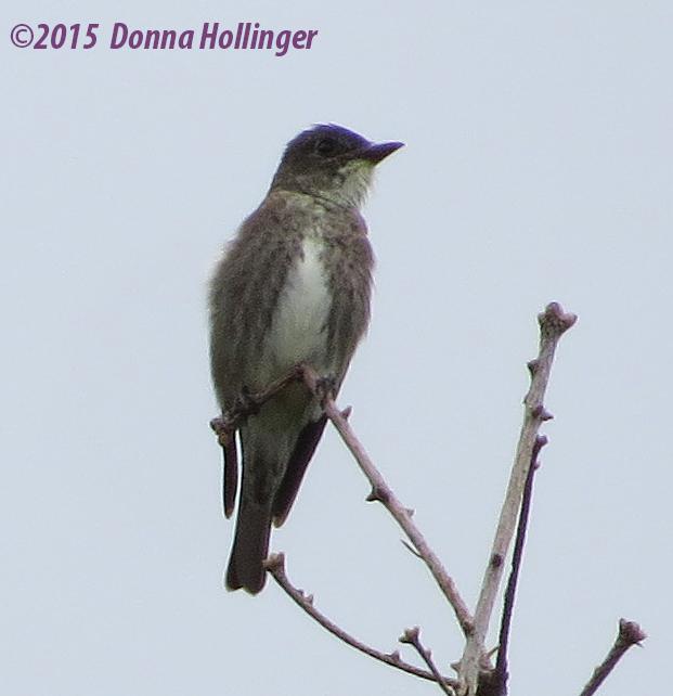Near the Beaver Dam, a bird...