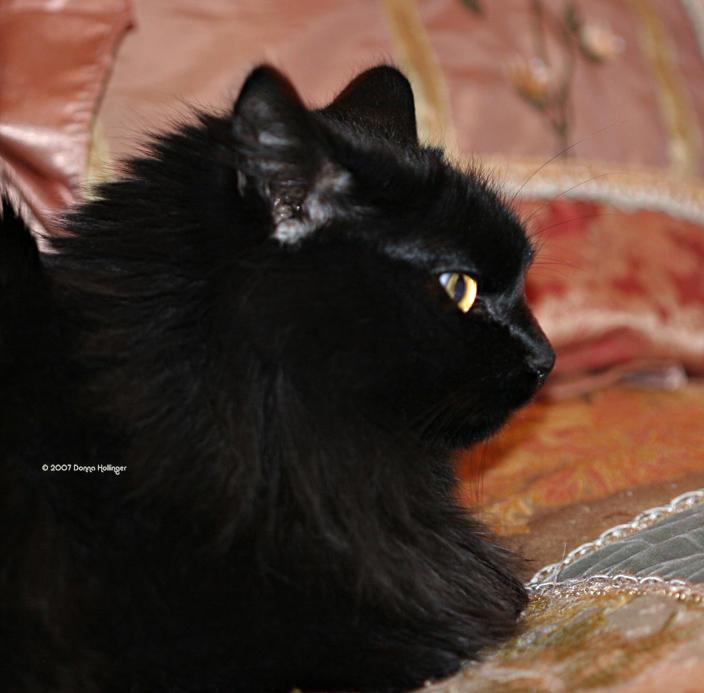 Kitty Sammy