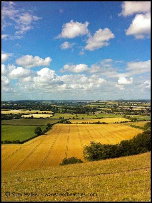Dorset view