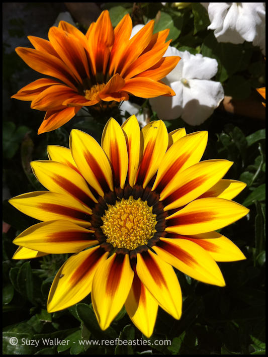 Nans Garden flowers