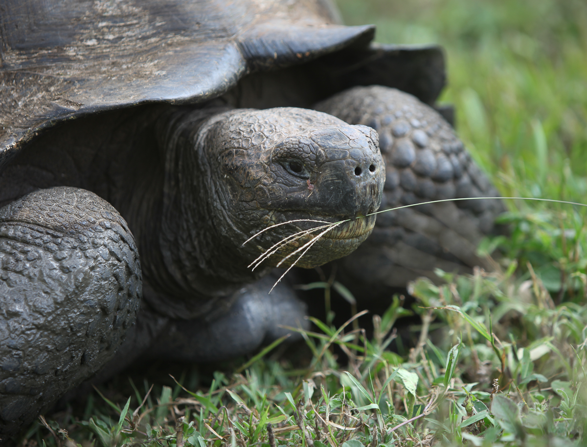 13-05 Galapagos 06.jpg