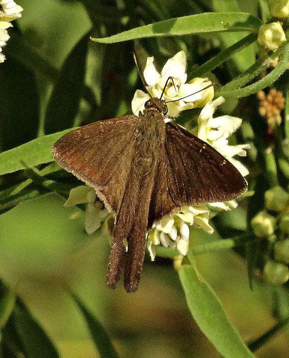 Butterfly Balsas
