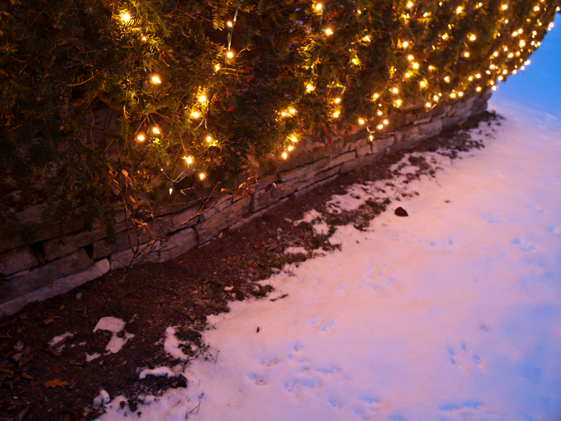Christmas lights and snow after dark