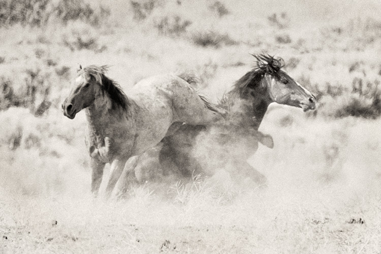 Mustang Kickout