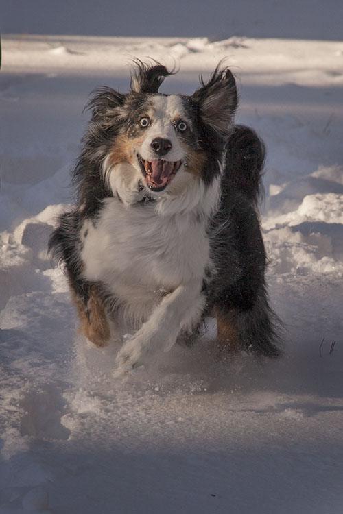 Im CRAZY for this SNOW!