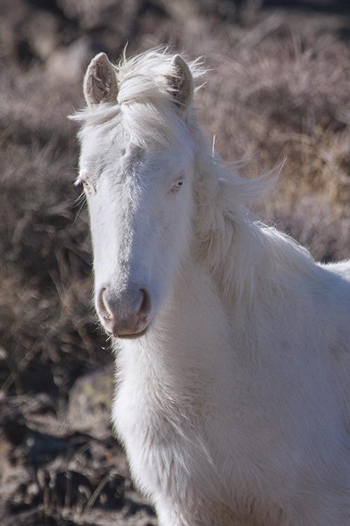 Darling Carmello Foal