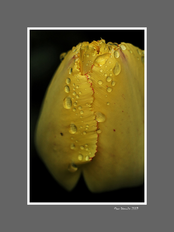 Floral 56