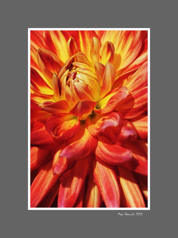 Floral 58