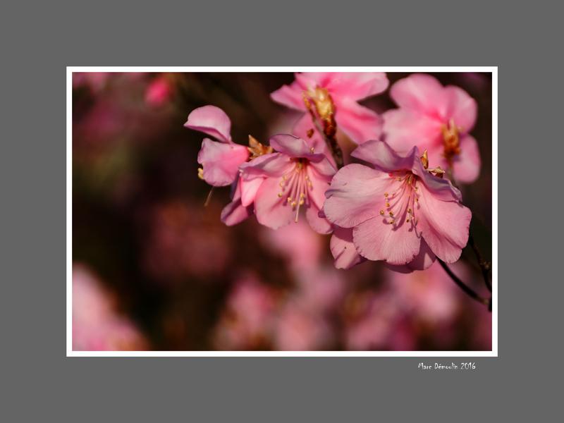 Floral 65