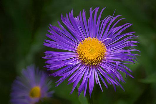 Purple yellow flower dscf5300 2 photo gordon w photos at pbase purple yellow flower dscf5300 2 mightylinksfo