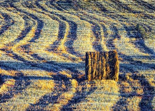 Bale In Mowed Field DSCF06635-7